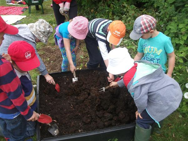 Adding horse manure to help our pumpkins grow.