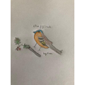Euan's amazing chaffinch drawn with such detail