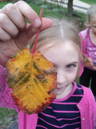 Class 2 Visit. What a lot of colours in a leaf!