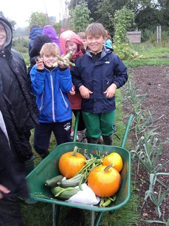 A lovely barrow full of produce.