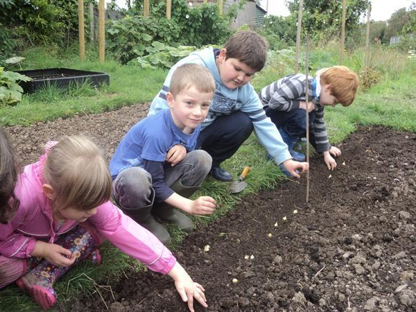 Planting onions.