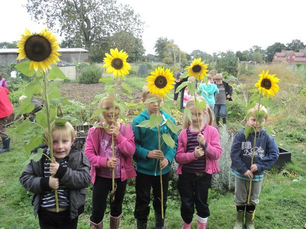 Sunny sunflowers to take back to school.