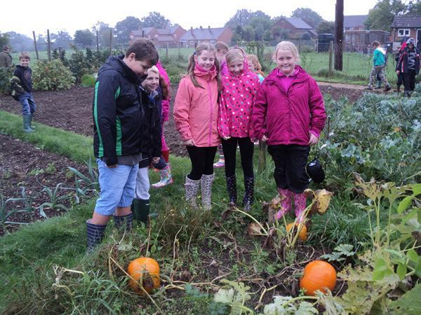 Class 4 Autumn visit to harvest pumpkins.