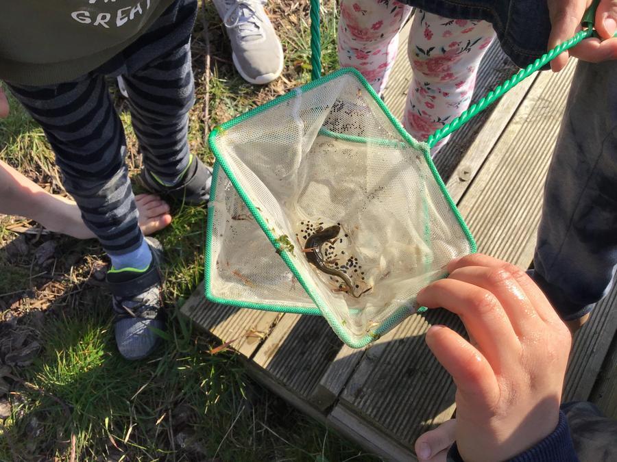 We found a newt!