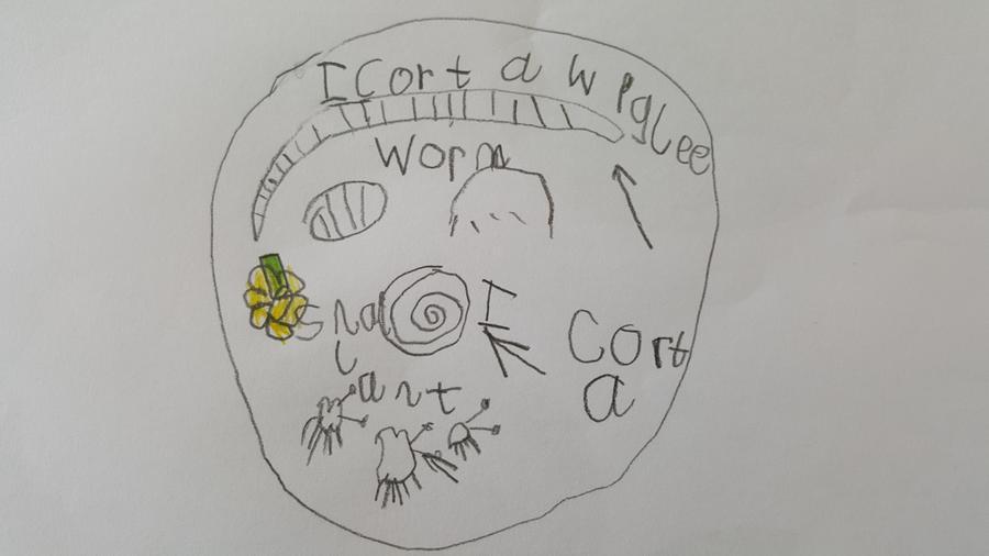 'I got a wiggly worm, I got a snail; ant.'
