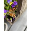 Maisy - butterfly