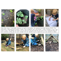 Growing Potatoes & Making a Bug House