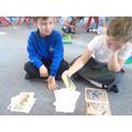 Sorting Australian animals