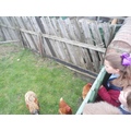 We saw home farms with plenty of chickens.