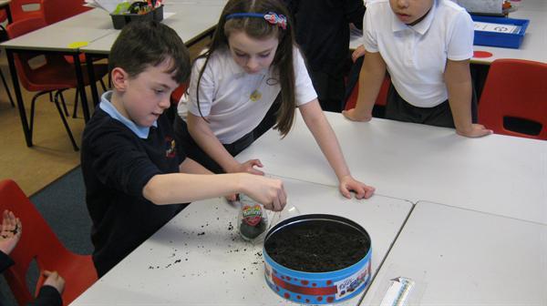 Investigating soil.