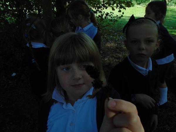 Lookingat different berries on the school grounds