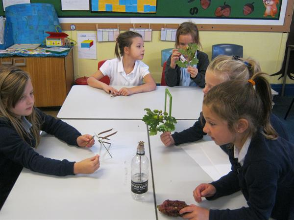 Looking at different seeds