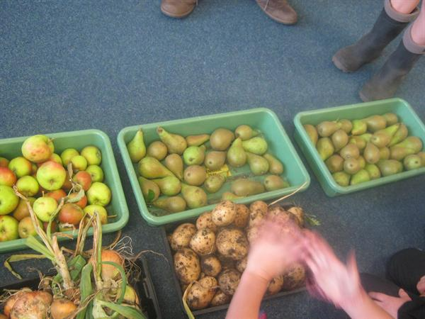 Collecting our harvest