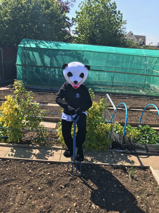 Working hard on his allotment
