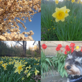 Spring Photo's