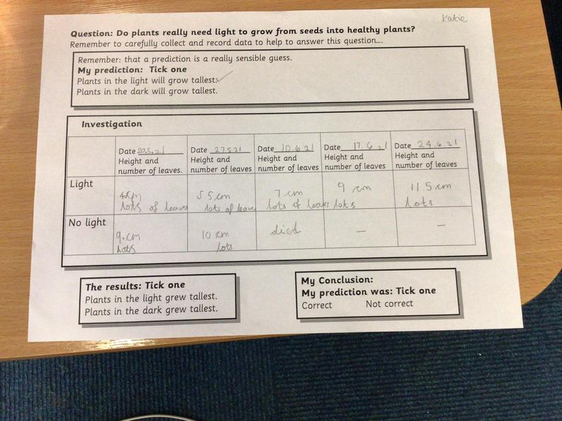 A Year 2 investigation