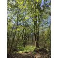 Bay Pond Nature Reserve woodland in springtime