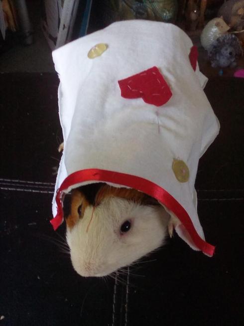 A 'piggy blanket'