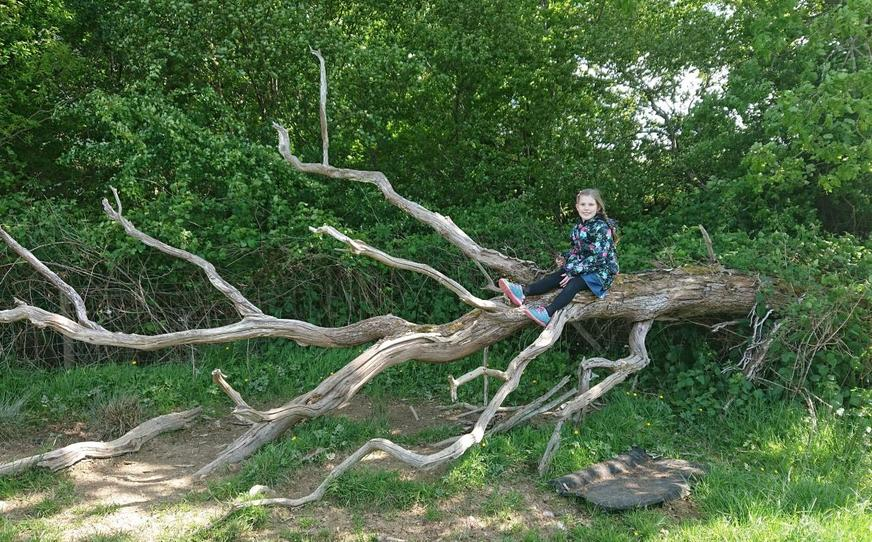 A spot of tree climbing