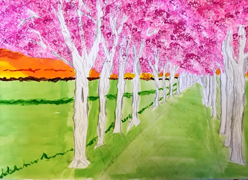 Daniel, Cherry Blossom Tree Avenue
