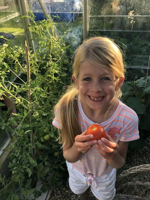 Harvesting her tomatoes
