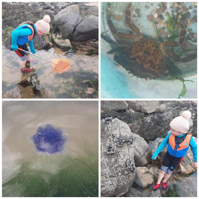 A weekend trip to the beech rock pooling.