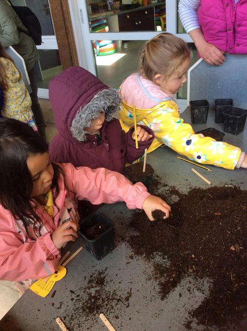 We planted peas and salad leaves