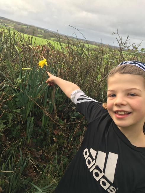 Spotting daffodils