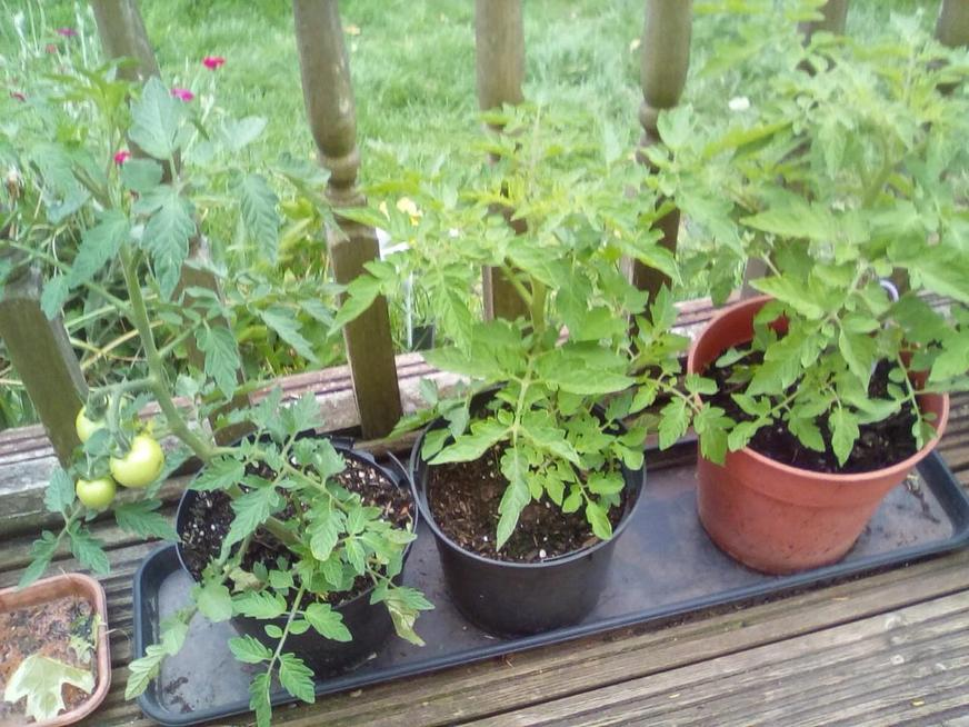 Vegetables all growing well