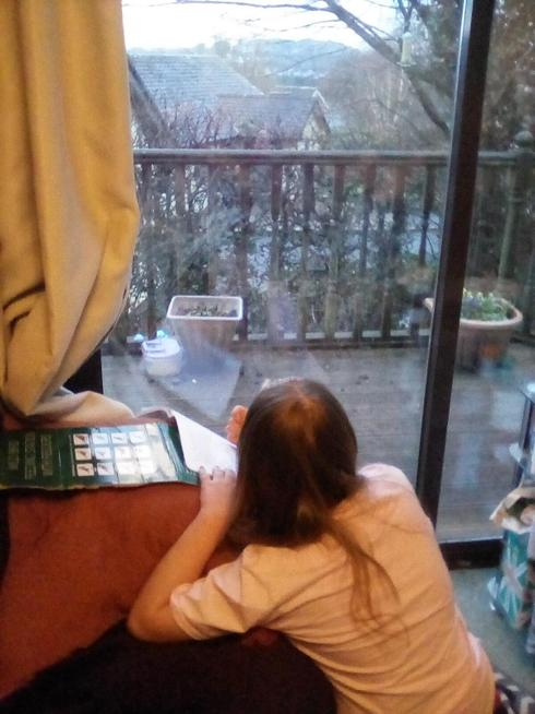 Joining in with the Garden Bird Watch