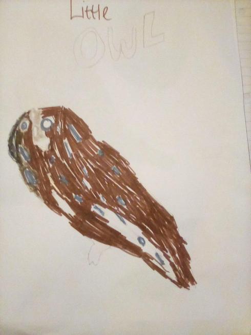 Maisie's Little owl,