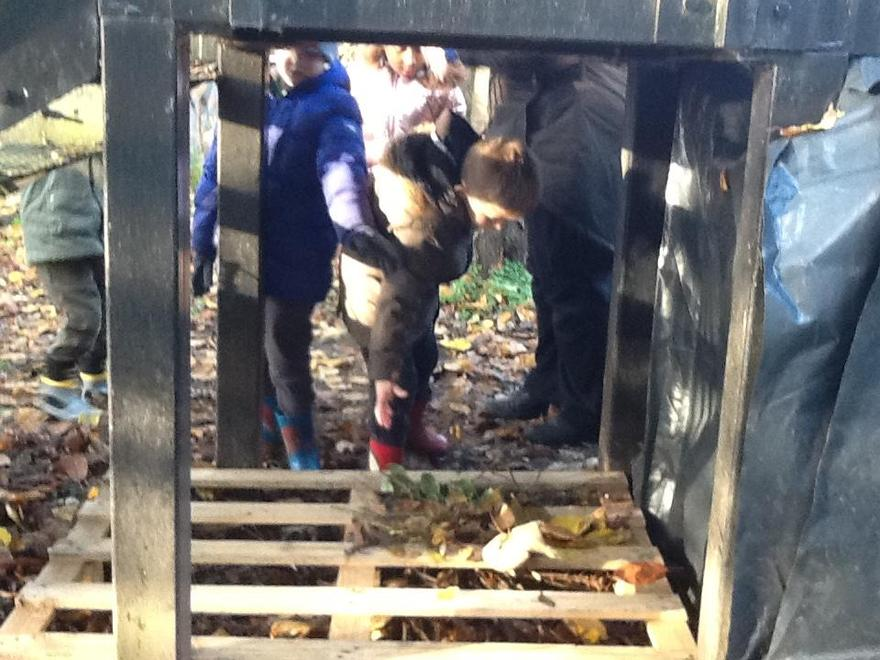 Building a habitat for the insects .