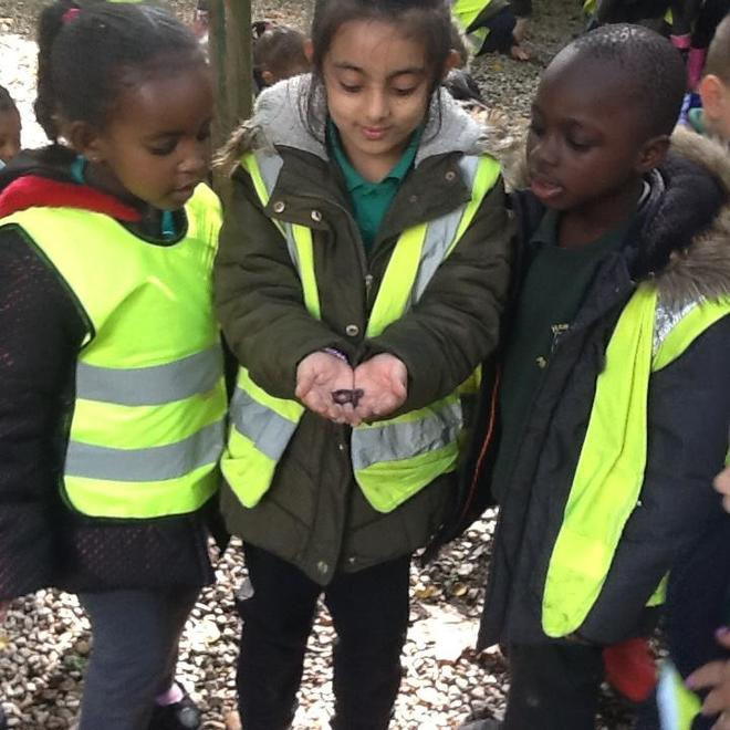 Finding A Worm!