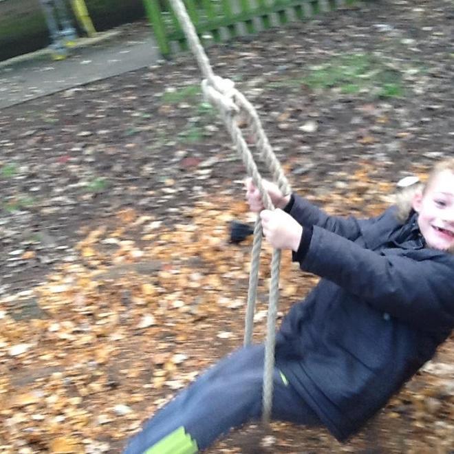 Harley enjoying the swinging on tree .