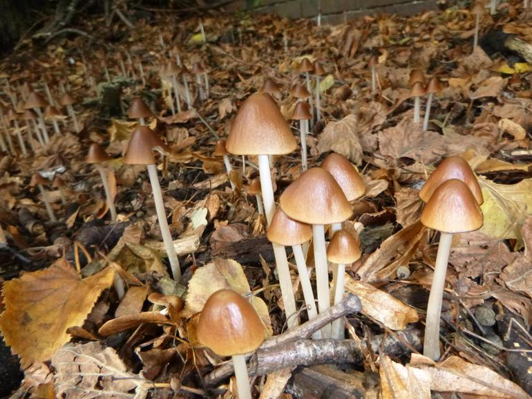 Magical little mushrooms