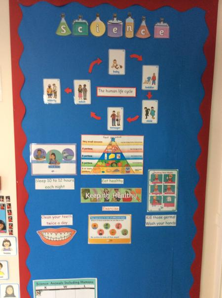 Science topic display - animals and humans (keeping healthy)