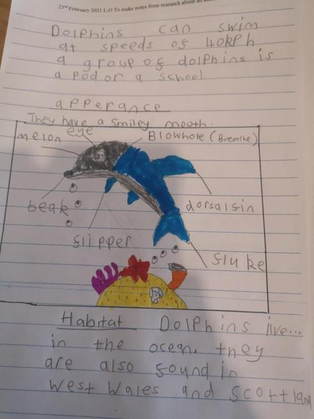 Researching Dolphins by Gracie-May