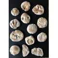 Huey's salt dough fossils