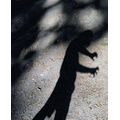 Dinosaur shadows!