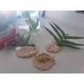 Super dinosaur fossils