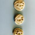 Joni's saltdough fossils