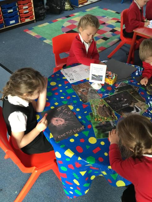 Drawing chalk forest animals