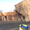 We went to Chester Zoo