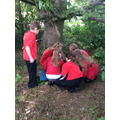Finding the best place for our class bird feeder