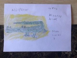 Lucas's great alligator drawing