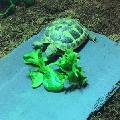AR tortoise - out of hibernation!