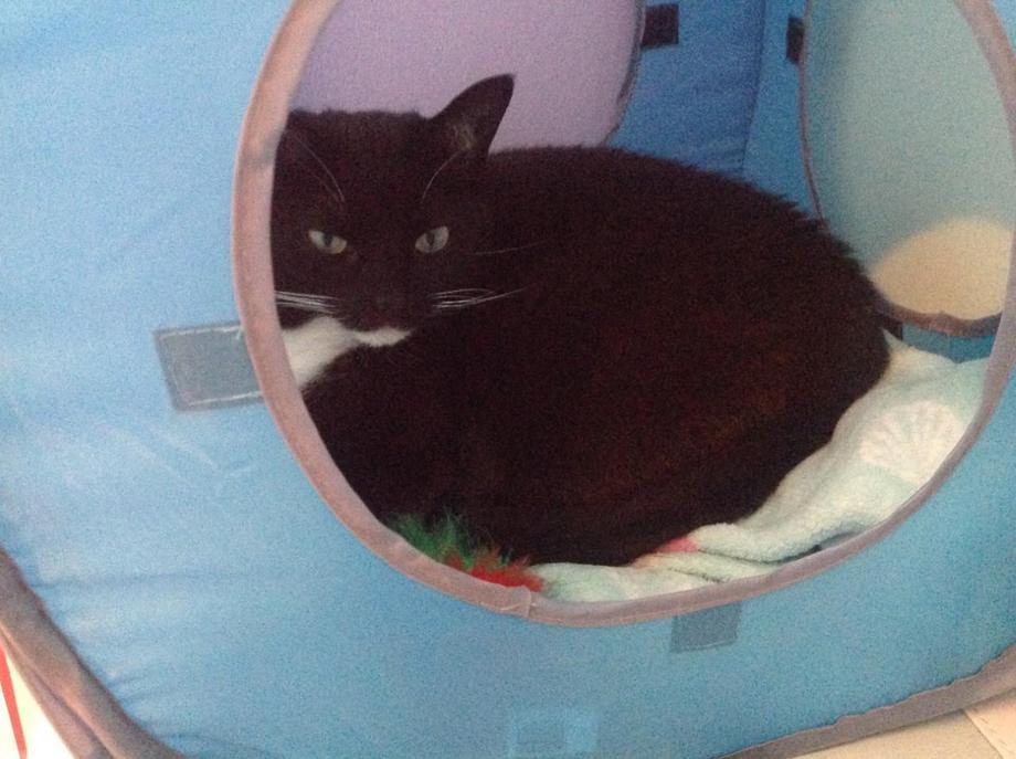 Meet BoBo - EB's cat!