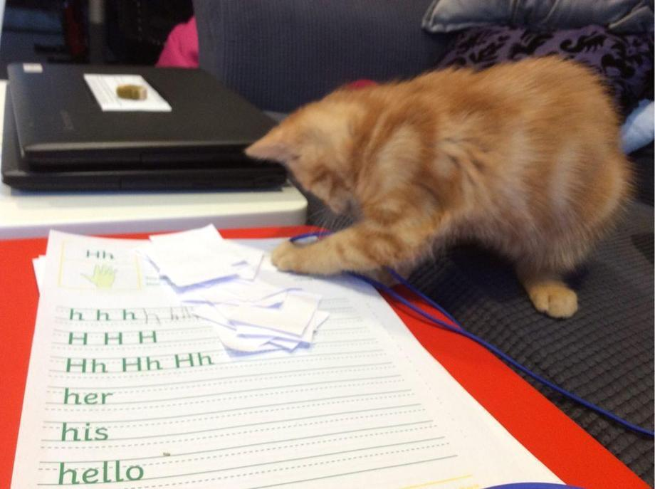Help with home learning from Charlotte's kitten