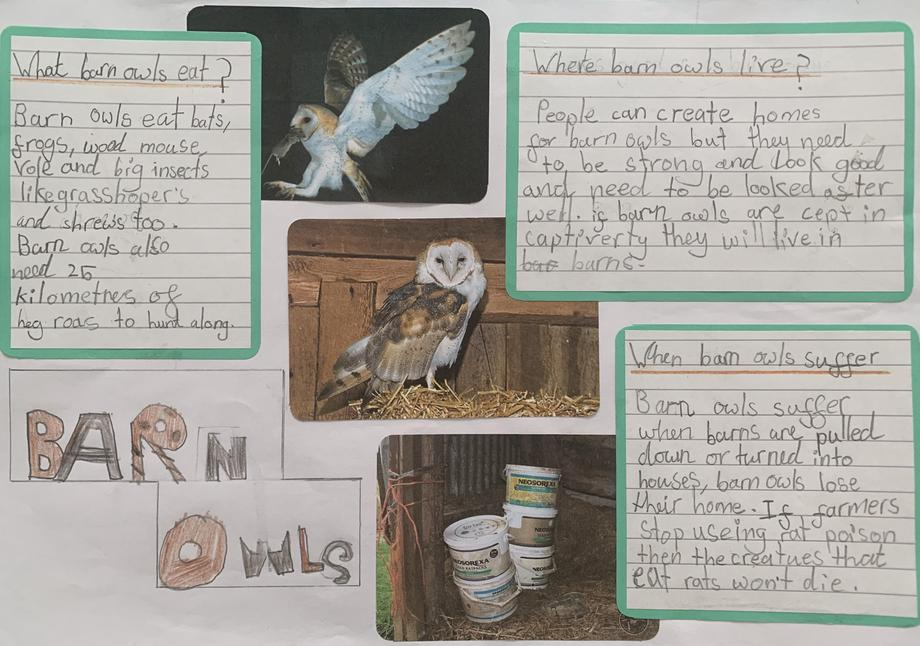 Annabella's owl poster