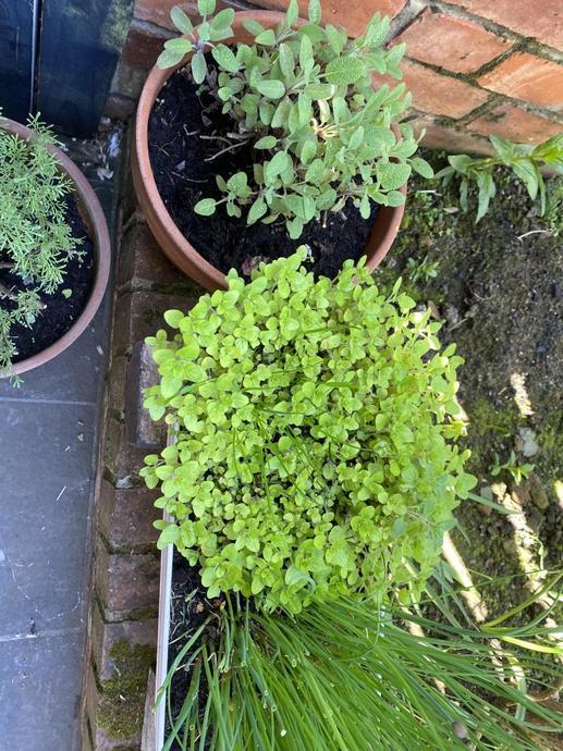 SG herb garden - which can you name?